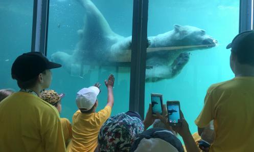 Idén is lesz Zoo Tábor!