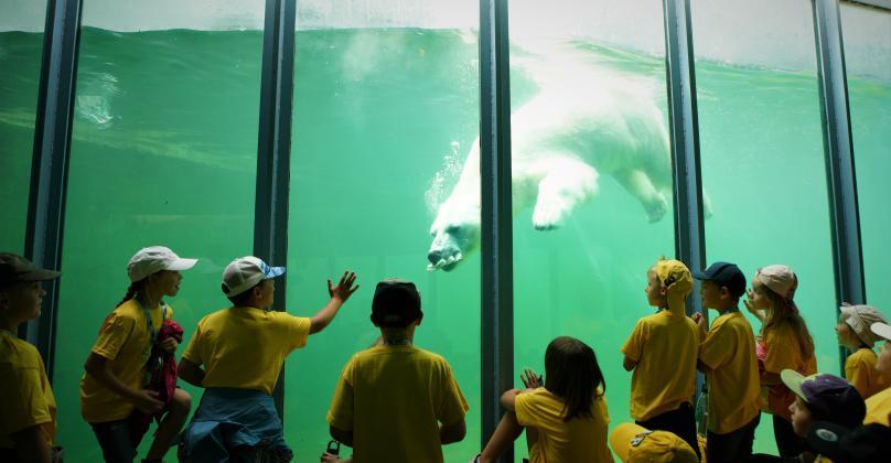 Őszi Zoo Tábor 2020